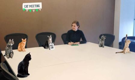 Becky Krause: Cat Meeting