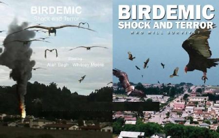 Birdermic
